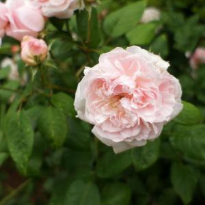种了这5种花,可以养一辈子!
