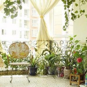 绿色家居好风水 提升健康运的植物推荐
