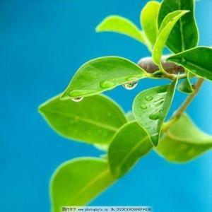 Baobab (Adansonia digitata) - 1ª parte