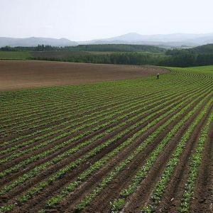 Química del suelo: introducción, los coloides, intercambio de bases.