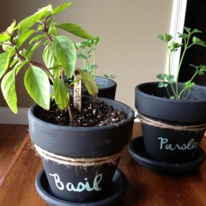 Ideas For Potted Plant Gifts: Giving Potted Plants As Gifts