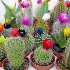 Reproducción con semillas de cactus y crasas