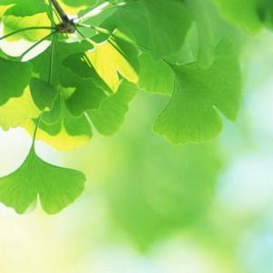 Taxonomía vegetal