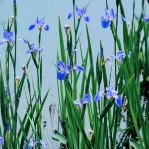 (养花达人分享经验)过干的盆土可以促进兰花生根