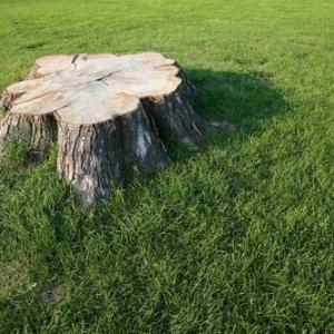 How to Kill the Roots of a Tree After Pulling Out the Tree