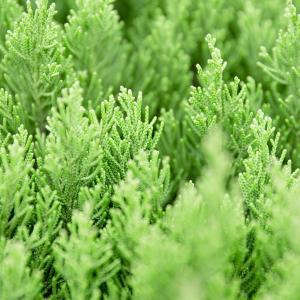 Best Ways To Harvest, Preserve & Store Your Garden Herbs