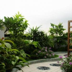 Best Terrace/Roof Garden Plants You should Grow