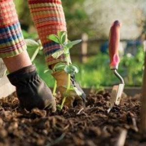 7 Vegetable Gardening Tips on Companion Planting, Intercropping & Crop Rotation