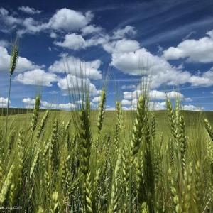 Los suelos agrícolas: interrupción de la sucesión vegetal.