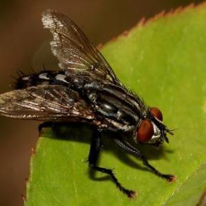 Mosquitos: ¿cómo combatirlos?