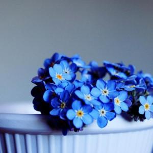 友達に贈りたい「友情」の花言葉をもつ花