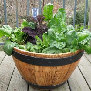 Growing Herb Plants Together: Best Herbs To Grow Together In A Pot