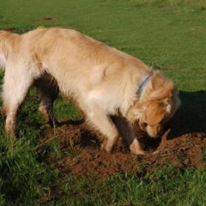 Perros: evitar los problemas en el jardín