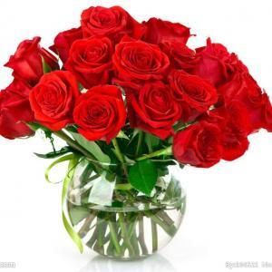 妖艳的玫瑰的怎样繁殖出来的