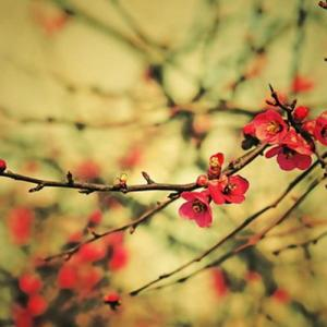 Mei flower—Mito enjoy