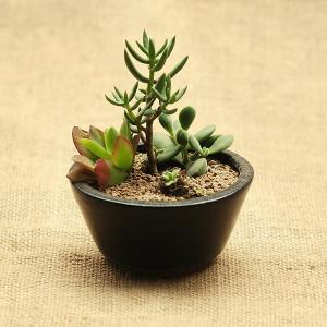 植物の良い株の選び方と都心・関西の人気ショップ