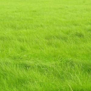 Secret of a Lush Green Lawn | Adding Manure