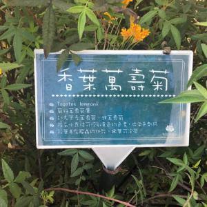 請問有人在賣香葉萬壽菊嗎?哪裡買得到?