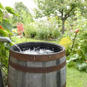 Mosquito Control In Rain Barrels: How To Control Mosquitoes In A Rain Barrel