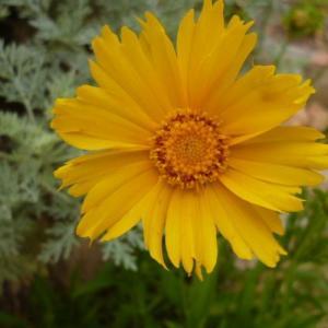 Multiplicar vivaces y perennes por semilla