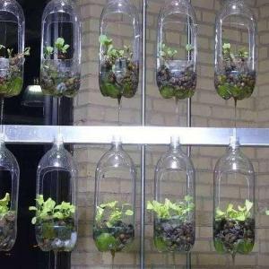 20种花塞进1个玻璃瓶,叶子突突冒水,美的不像样!