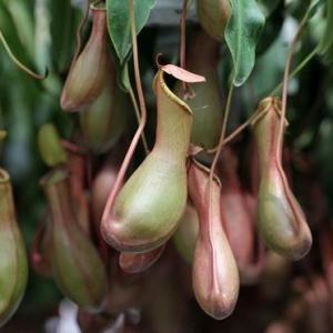 植物到底有没有区蚊虫的效果?