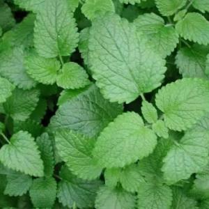 香草植物种植的5个小贴士