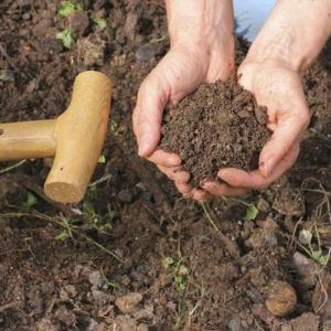 Crops That Grow in Loamy Soil
