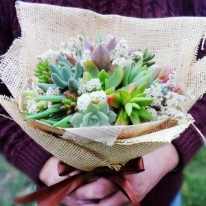 Cultivo de cactus y otras suculentas