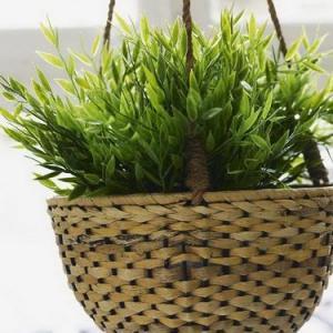 可以改变风水的绿色盆栽植物