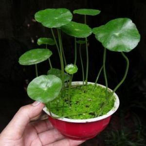 扔水里就能爆盆的6种植物,想养死都难!