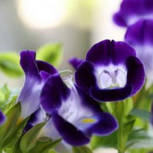 1. Época para sembrar semillas
