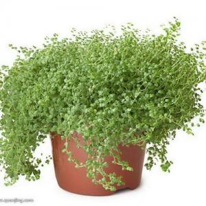 植物除了观赏,还有这样的作用。