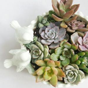 Luz y temperatura (cactus y crasas)