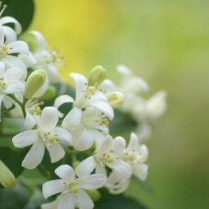 拍摄花卉照片的技巧