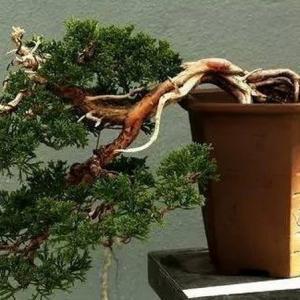 野外挖树桩注意事项及挖回后处理方法