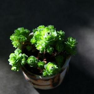 Learn How to Grow and Care for Succulents(1/2)