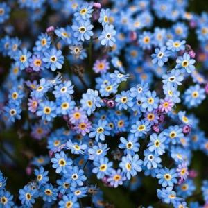 3. Sembrar anuales en la tierra del jardín