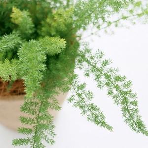 风水学说:家里养什么植物旺财