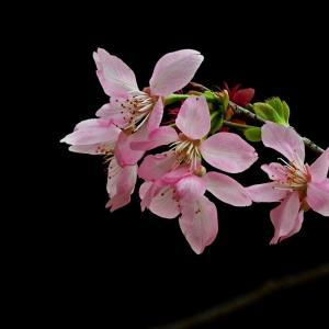 幸せを呼ぶ!「幸福」の花言葉をもつお花