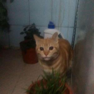 威基伍德的嫩叶都被猫啃掉了…赶紧把猫草种起来…