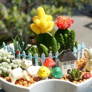 Plagas de cactus y suculentas