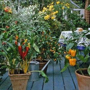 How to Make an Urban Vegetable Garden | City Vegetable Garden
