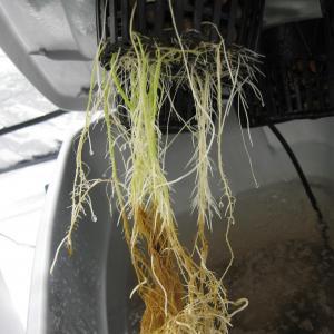 Treating Root Rot – Gardening Tips For Houseplants