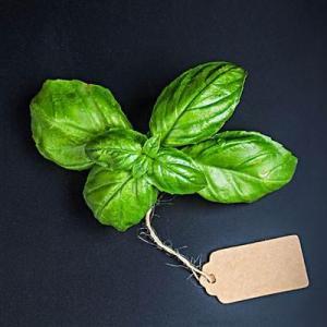 6种适合水培繁殖的香草植物,一杯清水和一段茎就能生根