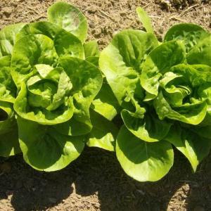 Siembra de hortalizas en semilleros recipientes