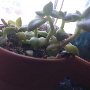 A bunch of my succulents have stems. I read in an article that they arent supposed to have stems. Am i doing something to cause them to have stems? Please help. 😊