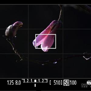 花卉摄影的测光与曝光