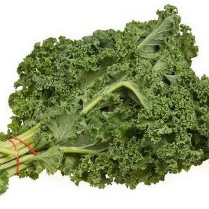 El cultivo ecológico de la Berza (kale) y sus propiedades nutricionales