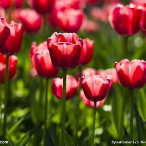 花卉摄影小窍门